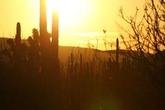 Złoty pustynny zmierzch z słońcem Obraz Royalty Free