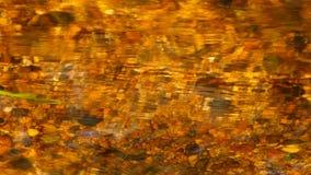 złoty strumienia zbiory