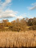 Złoty tło folujący traw płoch jesieni krajobraz Obraz Stock