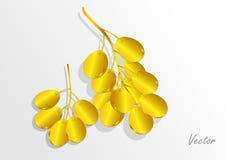 Złoty winogrono na białym tle również zwrócić corel ilustracji wektora Zdjęcia Stock