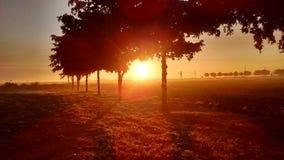 złoty wschód słońca obraz stock