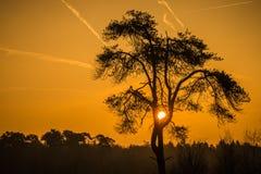 złoty wschód słońca Zdjęcia Royalty Free