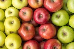 Złoty - wyśmienicie, galówko i babci Smith jabłko, obrazy royalty free