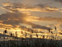 Złoty zmierzchu niebo w Clark okręgu administracyjnego bagien parku, Las Vegas, Nevada zdjęcie stock