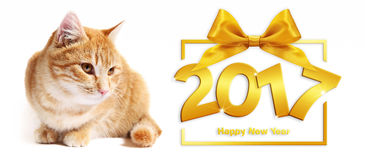 2017 złotych szczęśliwych nowego roku imbiru i teksta kotów na białym backgrou Zdjęcie Stock
