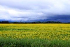 Złowieszcze chmury nad polem Manitoba Canola w okwitnięciu Zdjęcia Royalty Free
