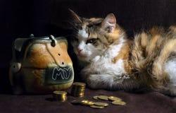 Zły kot na ciemnego brązu tle siedzi obok prosiątko banka obraz royalty free