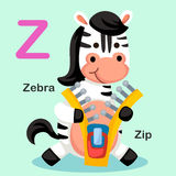 Z-застежка-молния письма алфавита иллюстрации животная, зебра Стоковые Изображения RF