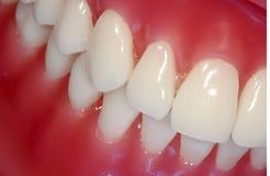 zęby Obraz Royalty Free