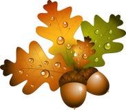 Z acorns dąb gałąź Zdjęcie Royalty Free