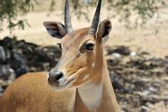 Z Afryka przyrody safari zoo parka Zdjęcie Stock
