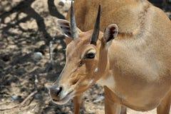 Z Afryka przyrody safari zoo parka Obrazy Stock