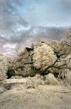 złamany drzewo Zdjęcia Stock