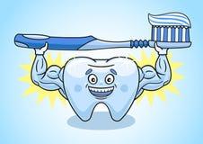 Ząb jest w znakomitym warunku Obrazy Stock