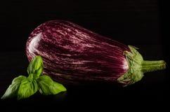 Z basilów liść świeża purpurowa oberżyna Fotografia Stock