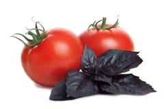 Z basilu ziele świezi pomidory Zdjęcie Stock