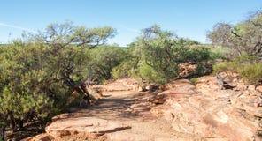 Z-Bend Bushland: Kalbarri. Z-bend bushland with red, sandstone rock in Kalbarri National Park under a clear blue sky in Western Australia Royalty Free Stock Photo
