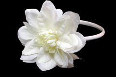 Z biały kwiatem włosiany zespół Fotografia Royalty Free