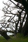 Z Bomen Royalty-vrije Stock Afbeelding