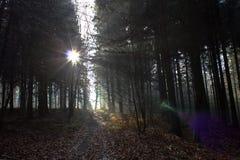 Z ciemnego lasu Obraz Stock