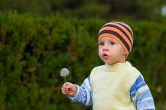 Z dandelion chłopiec Zdjęcia Royalty Free