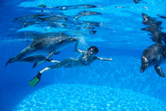 Z delfinami Obraz Royalty Free