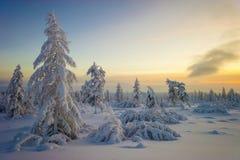 Z drzewami zima krajobraz Obraz Royalty Free