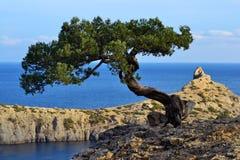 Z drzewem żołnierz piechoty morskiej krajobraz Obraz Royalty Free