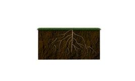 Z duży korzeniami glebowa sekcja obrazy stock