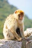 Z dzieckiem macierzysta małpa Zdjęcia Royalty Free