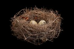 Z jajkami ptaka gniazdeczko Obrazy Royalty Free