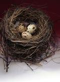 Z jajkami ptaka gniazdeczko Fotografia Royalty Free