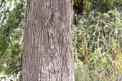Z klasą widok Drzewny bagażnik Zdjęcie Stock
