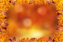 Z kolorowymi liść jesień tło zdjęcie stock