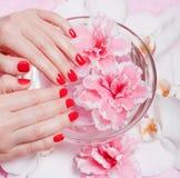 Z kwiatami czerwony manicure Zdjęcie Royalty Free