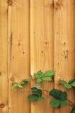 Z liść drewniany ogrodzenie Obraz Royalty Free