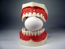 zęby modelowych Zdjęcie Royalty Free