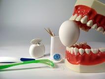 zęby modelowych Zdjęcia Royalty Free