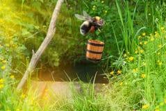 Z nektarem Bumblebee komarnicy Zdjęcia Royalty Free