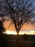 z nieba drzewo Fotografia Royalty Free