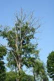 z nieba drzewo Zdjęcie Royalty Free