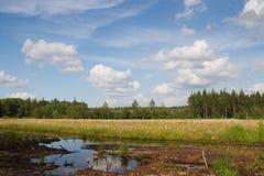 Z niebieskim niebem bagno holenderski krajobraz Zdjęcie Royalty Free