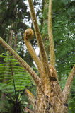 Z nowym frond paprociowy Drzewo obraz royalty free