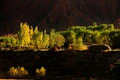 Złoci drzewa i zieleni drzewa obraz stock