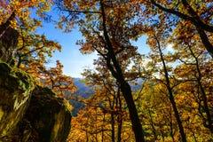 Złoci jesienni drzewa w lesie, natura Obraz Stock