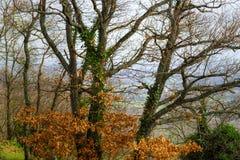 Złoci jesienni drzewa w lesie, natura Zdjęcia Royalty Free