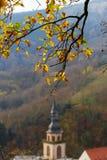 Złoci jesienni drzewa w lesie, natura Obraz Royalty Free