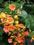 Złoci kwiaty lato Zdjęcie Royalty Free