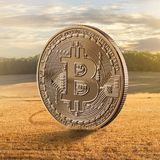 Złocistej monety bitcoin na tle pole Fotografia Royalty Free