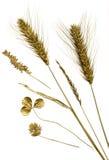 złocisty herbarium fotografia stock
